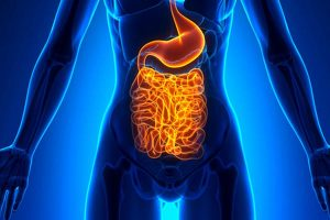 gut health and irritable bowel syndrome