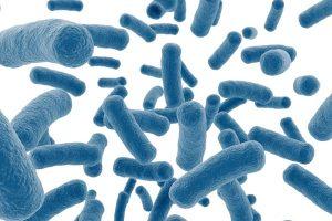 Probiotics for leaky gut